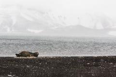 En skyddsremsa på en strand Royaltyfria Bilder