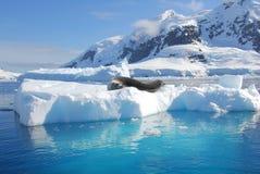 En skyddsremsa som vilar på ett isberg Royaltyfria Foton