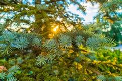En skygga solnedgång Fotografering för Bildbyråer