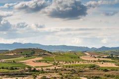 En skyine av vingårdar i Rioja, Spanien Royaltyfri Fotografi