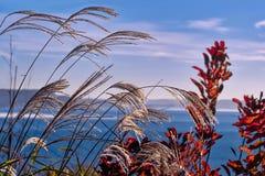 En skymt av havet till och med gräs royaltyfri fotografi