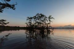 En skymt in i Cuyabeno djurlivreserv royaltyfri fotografi