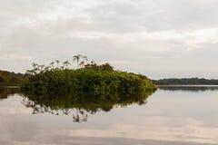 En skymt in i den Cuyabeno djurlivreserven, Sucumbios landskap arkivbilder