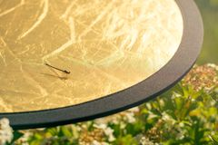 En sl?nda sitter p? en guld- reflektor under ett fotografi backstabbing arkivfoton