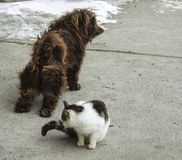 En släpande hund och en katt som sitter bredvid honom arkivfoton