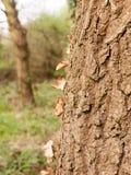 En slinga av sidor på sidan av ett träd Arkivfoto