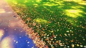 En slinga på vägen till huset och sidorna på gräsmattan Arkivbilder