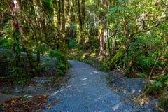 En slinga till och med ett frodigt grönt regn Forest Franz Josef Glacier National Park, Nya Zeeland fotografering för bildbyråer