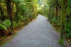 En slinga till och med ett frodigt grönt regn Forest Franz Josef Glacier National Park, Nya Zeeland royaltyfria foton