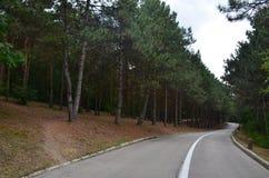 En slingrig asfaltväg med en delande remsa som går till och med pinjeskog royaltyfria foton