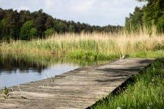 En slingrig träbro i skogbanan för skog som A leder acr arkivbild