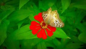 En smak av honung Royaltyfri Fotografi