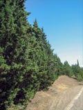 En smal asfaltväg på en varm solig dag förbi vintergröna träd och sol-bränt gräs royaltyfri foto