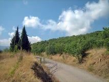 En smal asfaltväg på en varm solig dag förbi vintergröna träd och sol-bränt gräs arkivfoto