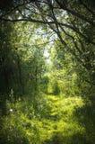 En smal bana i den felika skogen Arkivfoto