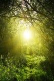 En smal bana i den felika skogen Royaltyfri Foto
