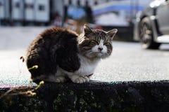 En smutsig katt som solbadar i morgonen Arkivbild