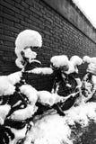 En snö täckt cykel Arkivfoto