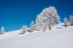 En snöig lutning upptill av berget med en blå klar himmel och träd arkivbilder
