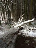 En snöig stam Royaltyfri Foto