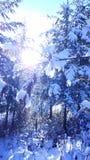 En snöig tur Royaltyfri Bild