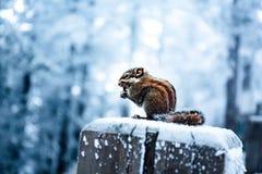 En sn?ig sikt av xiling sn?muntain arkivfoton
