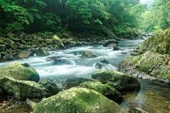 En snabb ström som flödar till och med en mystisk skog av frodig grönska Royaltyfri Bild