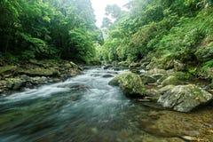 En snabb ström som flödar till och med en mystisk skog av frodig grönska Royaltyfria Foton