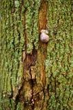 En snigel på ett grönt träd arkivfoto