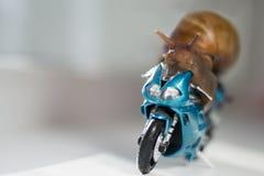 En snigel rider en tävlings- motorcykel, begrepp av hastighet och framgång, selektiv fokus Arkivbilder