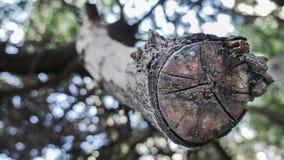 En snittträdstam i en zoomad skog Arkivfoto