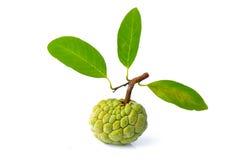 En sockerApple frukt Arkivfoto