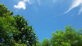 En solig dag av den regniga säsongen, träd under kanfas av himmel royaltyfri bild