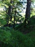 En solig dag i skogen Royaltyfri Bild