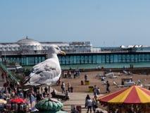 En solig dag på stranden på Brighton royaltyfria bilder