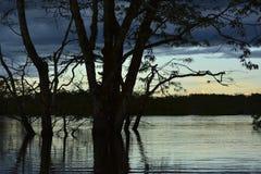 En solnedgång i amasonregionen av Yasuni royaltyfri bild