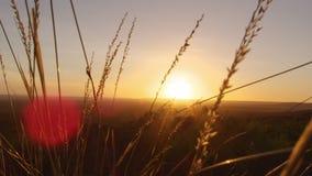 En solnedgång och ett gräs- fält stock video