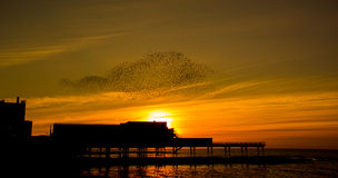En solnedgångdans - stare Arkivfoto