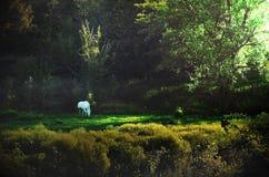 En soluppgång och en häst arkivbilder
