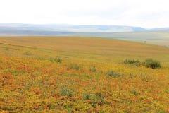 En som inte är kartlagd höst för härligt landskap: ljus röjning med gräsplan, guling, röda örter, berg och himmel Royaltyfria Foton