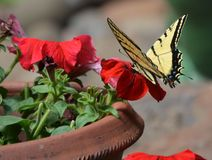 En sommar fyllde med fjärilar i blommaträdgården Royaltyfria Foton