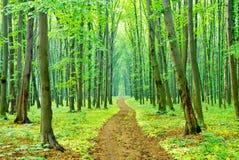 """""""En sommarmorgon på en vandringsled i skogen. '', Royaltyfri Foto"""
