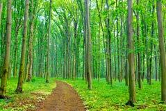 """""""En sommarmorgon på en vandringsled i skogen. '', Royaltyfri Fotografi"""