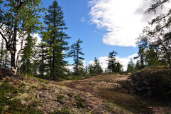 En sommarskog och stora vita moln i den ljusa himlen Royaltyfria Bilder