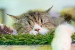 En sova katt Royaltyfri Bild