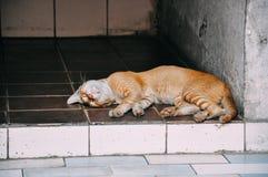 En sova katt i Yangon fotografering för bildbyråer