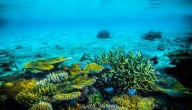 En special dyk i Maldiverna Härlig dyk arkivfoton