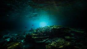 En special dyk i Maldiverna Härlig dyk royaltyfria foton