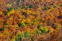 en spektakulär höst färgar träd i skogen arkivbilder