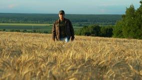En spenslig medelålders man som går på ett vetefält på en sommardag arkivfilmer